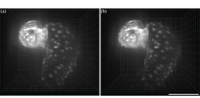 IEEE Life Sciences: Spotlight on Research in Biological Imaging